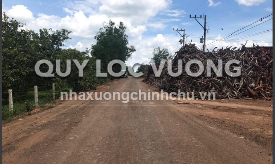 Bán xưởng đang sản xuất gạch xã Tân Hiệp huyện Hớn Quảng Bình Phước diện tích 28.000m2
