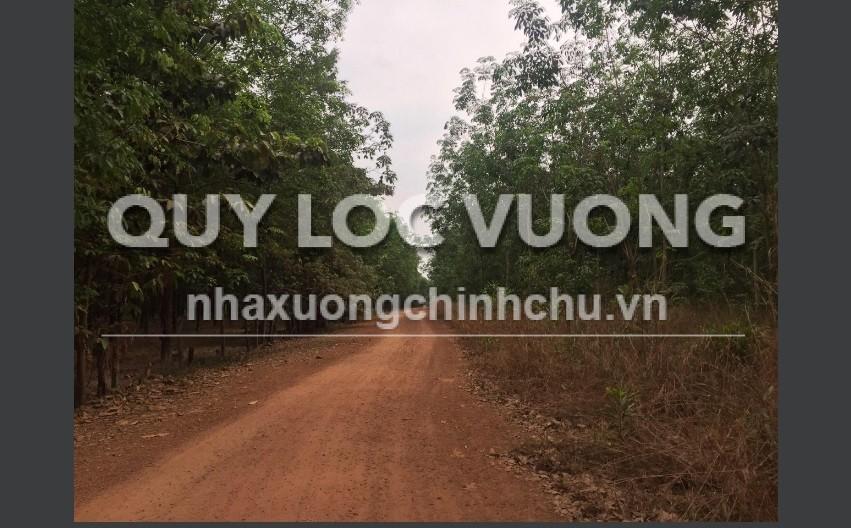 Bán 16ha đất xây xưởng tại xã Lai Hưng huyện Bàu Bàng, tỉnh Bình Dương