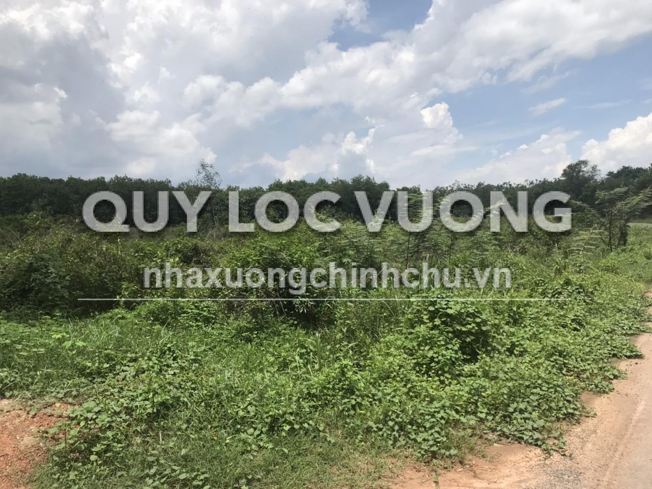 Bán 20.000m2 đất SKC mặt tiền đường nhựa xã Vĩnh Tân Tân Uyên, Bình Dương