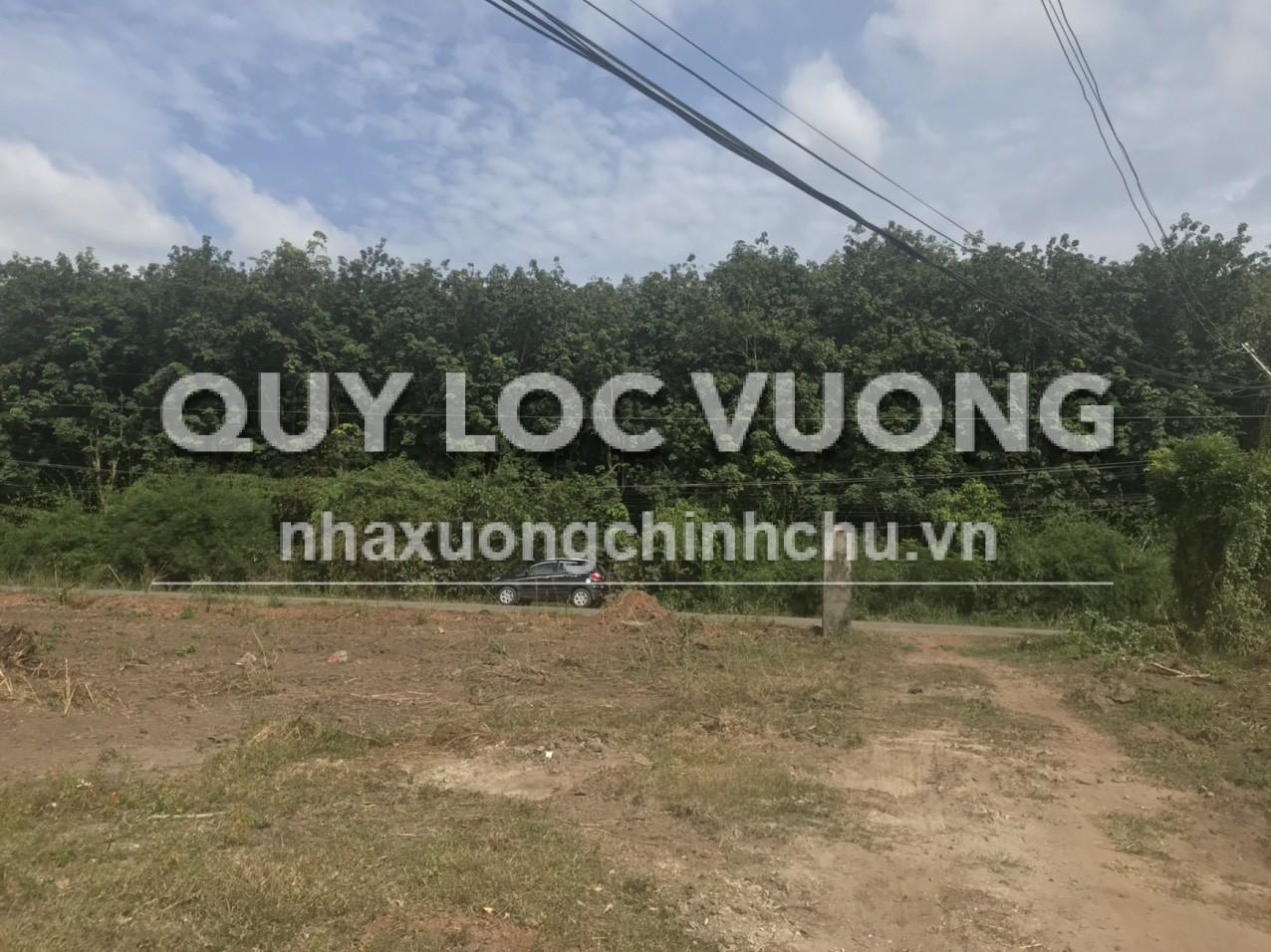 Bán đất trồng cây lâu năm khu vực xã Tam Lập huyện Phú giáo 97.500m2