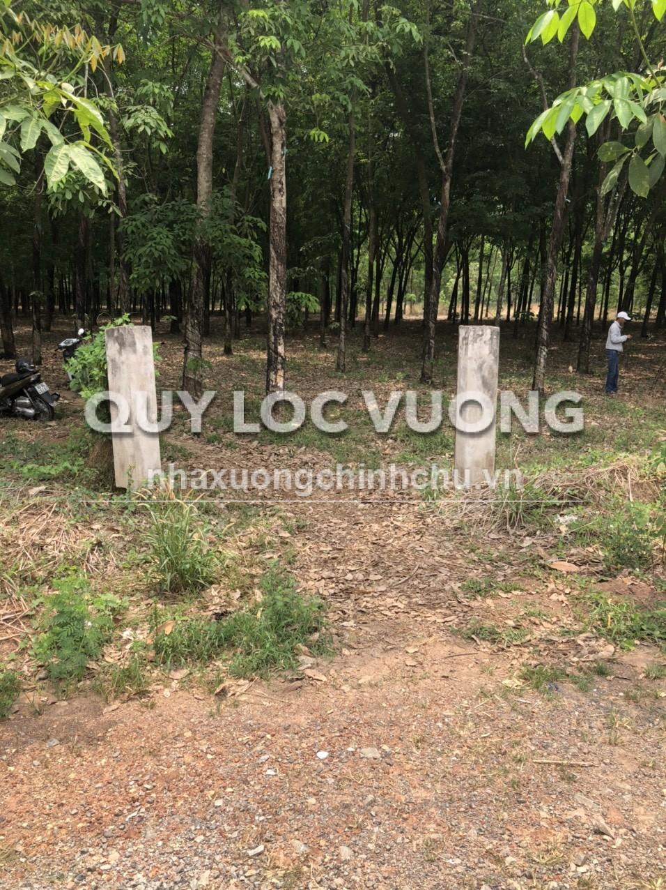 Bán đất trống 69.737m2 ở xã Đất Quốc huyện Bắc Tân Uyên Bình Dương